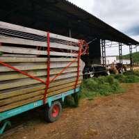Royesfarm - IMG_20200429_105520 - 1600 px