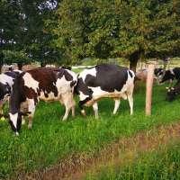 Royesfarm - IMG_20200818_183445 - 1600 px