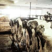 Royesfarm - PSX_20200820_214309 - 1600 px